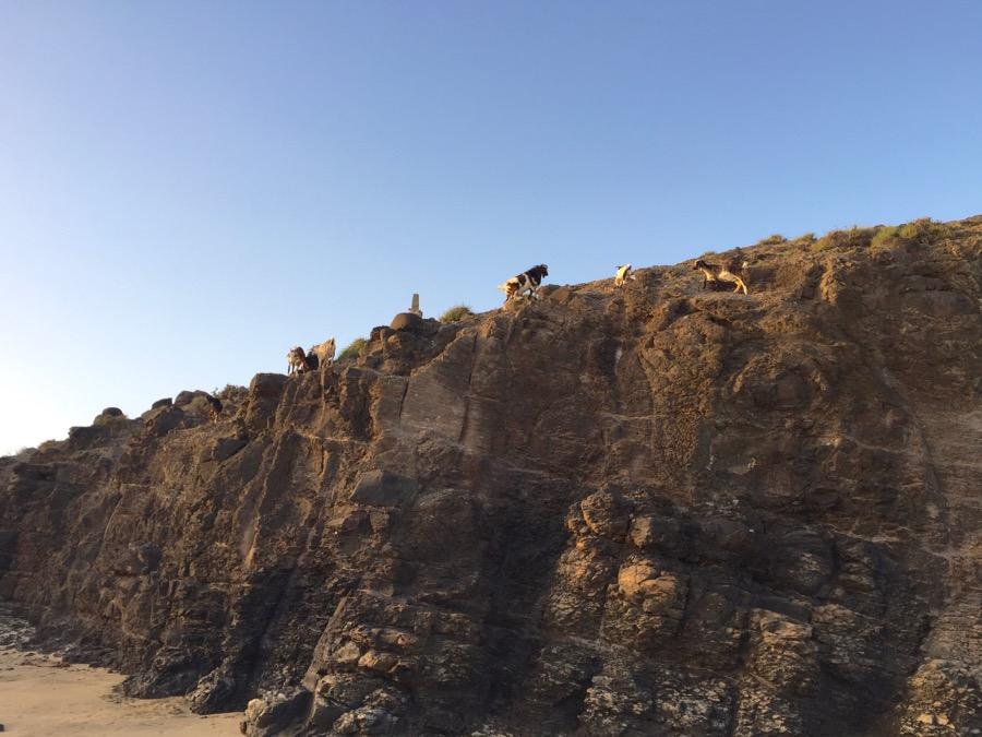 Fuerteventura und die mit der Ziege tanzen.